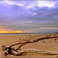 Dog-friendly beach and dog walk near St Andrews, Scotland - Dog walks in Scotland