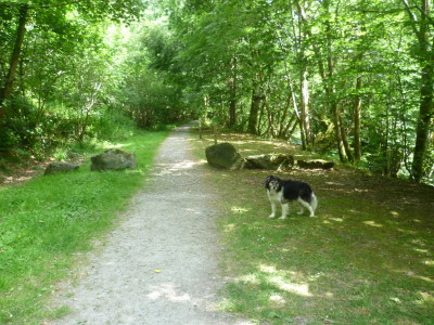 Dog walk in the Dyfnant Forest, Wales - Driving with Dogs