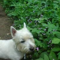 Burntisland dog walk near Kirkcaldy, Scotland - Dog walks in Scotland