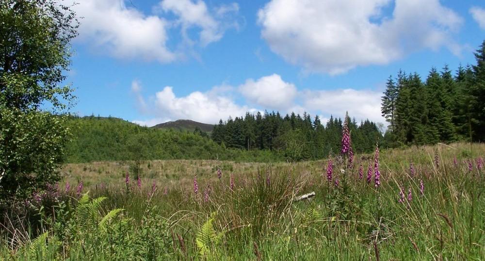 A83 dog walk in Ardcastle Woods, Scotland - Dog walks in Scotland