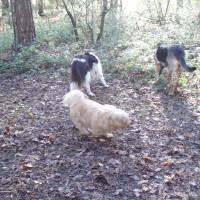 Hinchingbrooke Country Park dog walks, Cambridgeshire