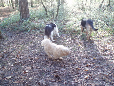 Hinchingbrooke Country Park dog walks, Cambridgeshire - Driving with Dogs