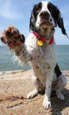 Locke & Preston Vet Group, Cornwall - Driving with Dogs