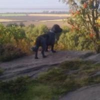 Royden Park, Merseyside - Dog walks in Merseyside