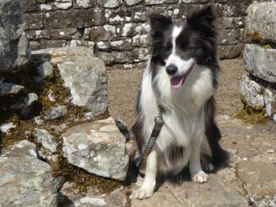 Hadrian's dog walk, Cumbria - Driving with Dogs