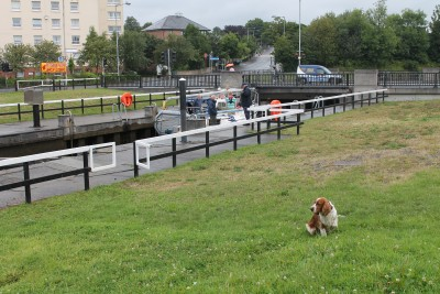 Clydebank dog walk, Scotland - Driving with Dogs