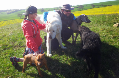 Ash and Dogs Around Us, Bedfordshire - Driving with Dogs
