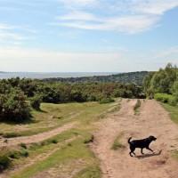Thurstaston Common and Hill, Merseyside - Dog walks in Merseyside