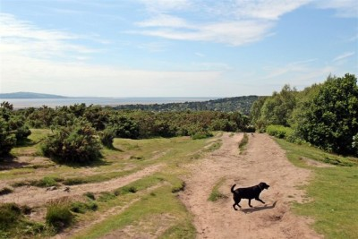 Thurstaston Common and Hill, Merseyside - Driving with Dogs