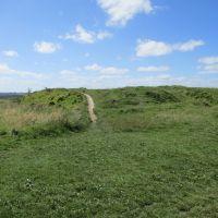 M4 Junction 15 dog walk on the Downs, Wiltshire - Dog walk near the M4 Jct 15.JPG