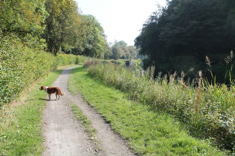 Kirkintilloch dog walk, Scotland - Dog walks in Scotland