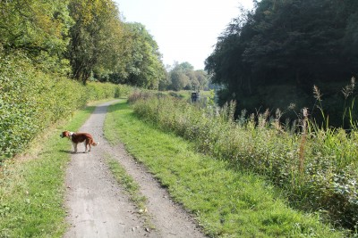 Kirkintilloch dog walk, Scotland - Driving with Dogs