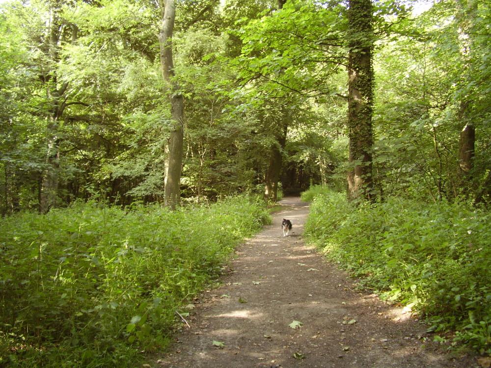 Tankersley local dog walk, Yorkshire - Dog walks in Yorkshire
