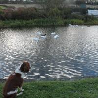 M80 Junction 6a dog walk near Banknock, Scotland - Dog walks in Scotland