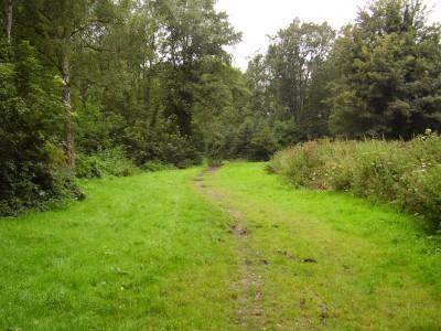 M5 Junction 30 Millenium Woods Topsham dog walk, Devon - Driving with Dogs