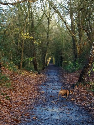Smestow Valley Nature Reserve dog walk, Wolverhampton, West Midlands - Driving with Dogs