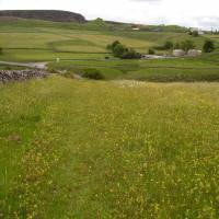Buxton dog walk, Derbyshire - Dog walks in Derbyshire