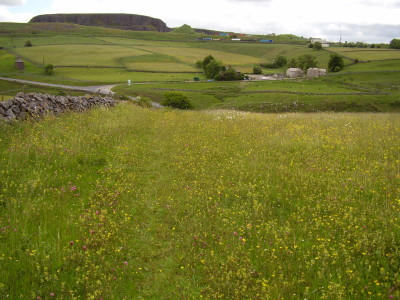 Buxton dog walk, Derbyshire - Driving with Dogs