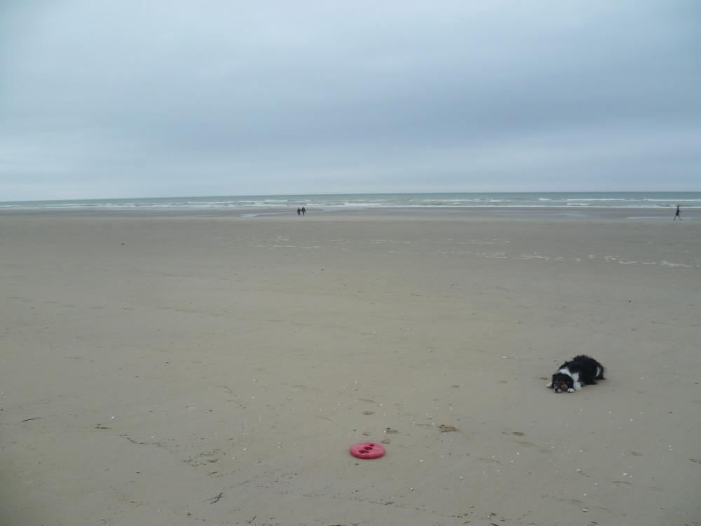 A16 exit 26 Stella - dog-friendly beach, France - Image 1