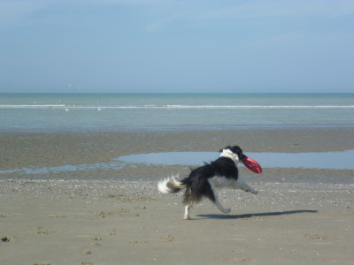 Quend dog-friendly beach, France - Driving with Dogs