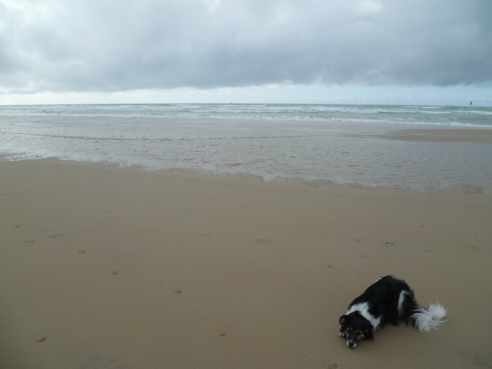 A16 exit 38 Wissant dog-friendly beach, France - Image 2
