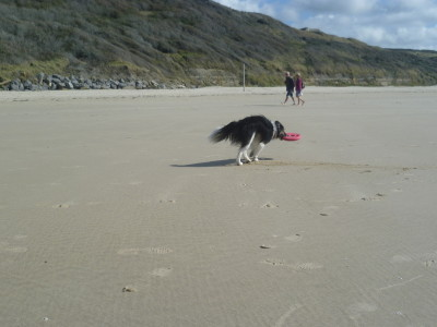 Boulogne area dog friendly beach, France - Driving with Dogs