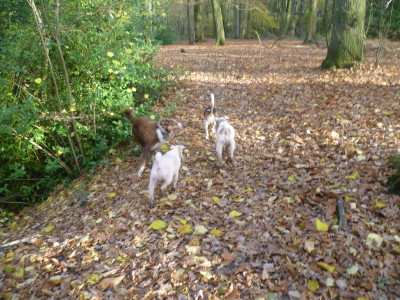 Coille an Fhaltaigh dog walk near Kilkenny, RoI - Driving with Dogs