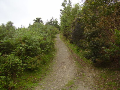 Cratloe dog walk near Limerick, RoI - Driving with Dogs