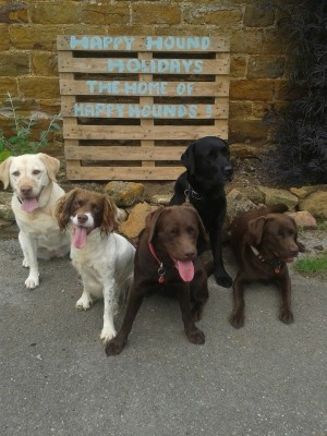 Happy Hound Holidays, Northamptonshire - Driving with Dogs