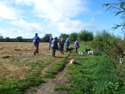 Henley-in-Arden dog walk and dog-friendly pub, Warwickshire - Driving with Dogs