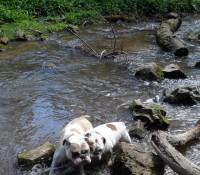 River Ffyddion dog walk near Rhyl, Wales - Dog walks in Wales