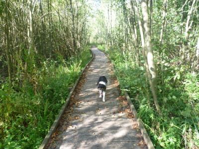 A16 exit 27 Nature Reserve dog walk and activity trail, France - Driving with Dogs
