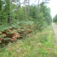 A84 exit 25 dog walks in the Forest, France - Image 1