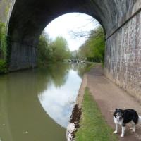 Leamington Spa dog walk, Warwickshire - Dog walks in Warwickshire