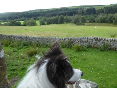 A68 A walk through Reiver country, Northumberland - Driving with Dogs