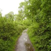 M5 Junction 18 and 19 woodland dog walk, Somerset