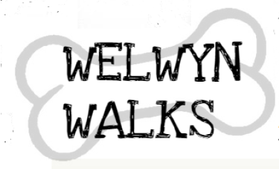 Welwyn Walks, Hertfordshire - Driving with Dogs