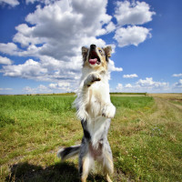 Positive 4 Paws, Hampshire - Image 3