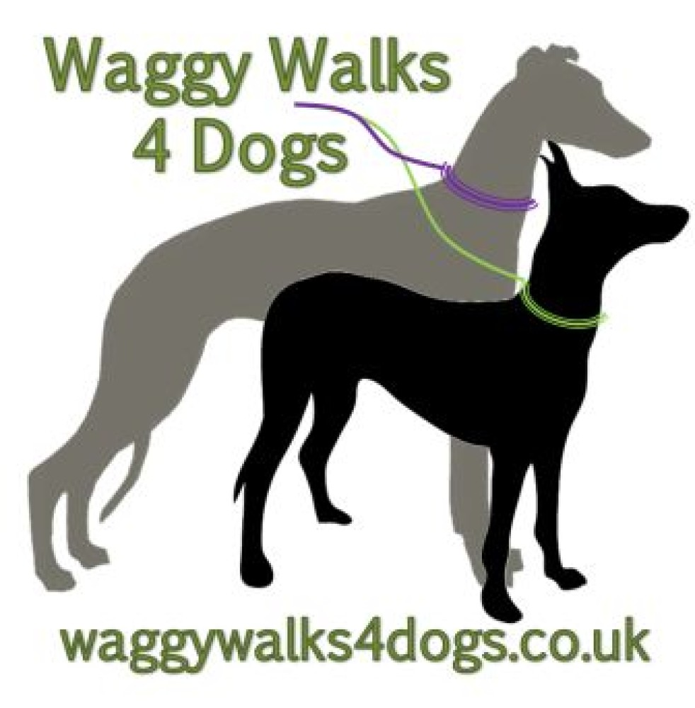 Waggy Walks 4 Dogs, Hampshire - Image 1