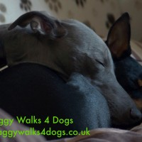 Waggy Walks 4 Dogs, Hampshire - Image 2