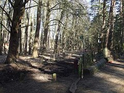 Aspley Woods dog walk, Bedfordshire - Driving with Dogs