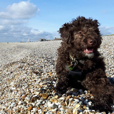 Lee-on-the-Solent dog friendly beach, Hampshire - Driving with Dogs