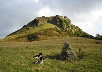 A55 dog walk near Conwy, Clwyd, Wales - Driving with Dogs