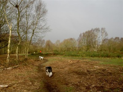 Dog walks on the heath close to Norwich, Norfolk - Driving with Dogs