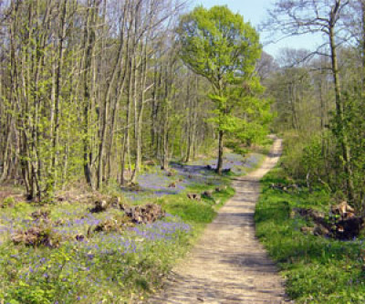 Norsey Woods dog walk near Billericay, Essex - Driving with Dogs