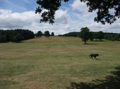 Cofton Park local dog walk, West Midlands - Driving with Dogs