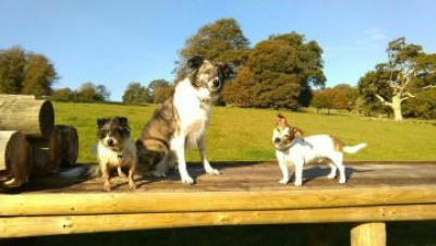 A38 dog walk and cafe near Bodmin, Cornwall - Driving with Dogs