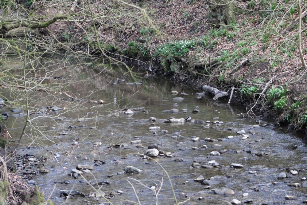 Borsdane Woods dog walk, Lancashire - Dog walks in Lancashire