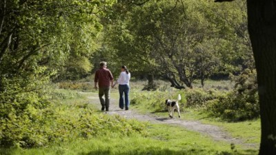 A414 Huge open space for dog walking and a dog-friendly pub too, Essex - Driving with Dogs
