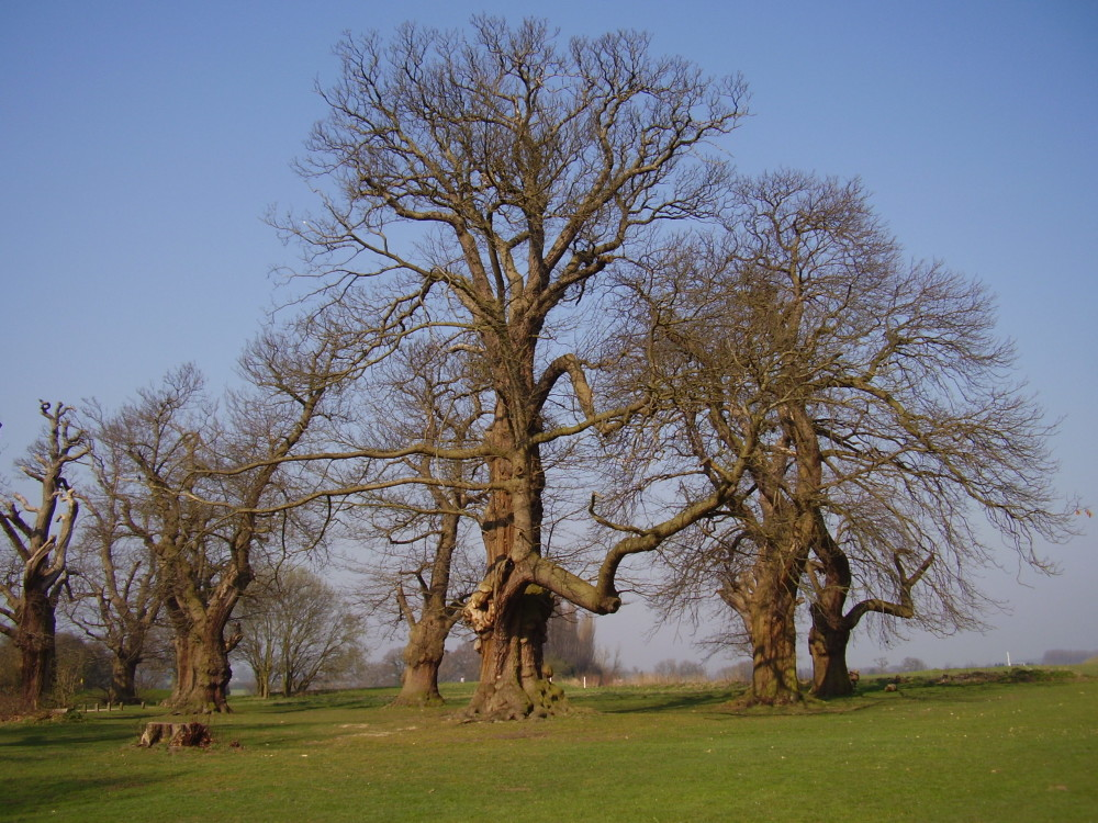 M1 Junction 10 dog walk and cafe near Luton, Bedfordshire - Dog walks in Bedfordshire